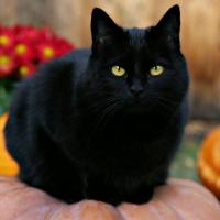 林夫人的猫