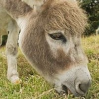 一只驴宝宝