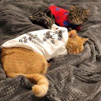 养猫那些年