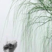 杨文强说动漫