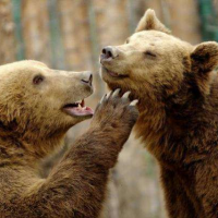 小熊熊动漫世界