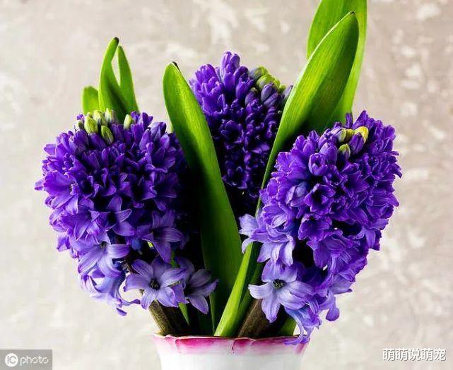 心理學:你第一眼喜歡哪束花,測出你身邊有沒有人正在暗戀你-圖2