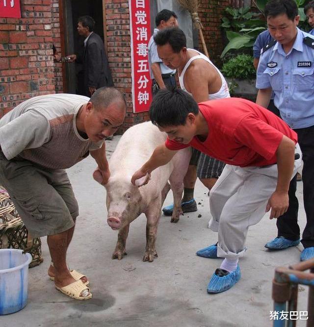 """凍肉來襲屠企壓價,豬價""""上漲生變"""",要跌回15元一斤?答案來瞭-圖5"""