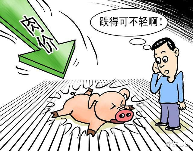 """10月7日豬價:5漲12跌!毛豬價""""3連跌"""",要跌回5月""""地板線""""?-圖5"""