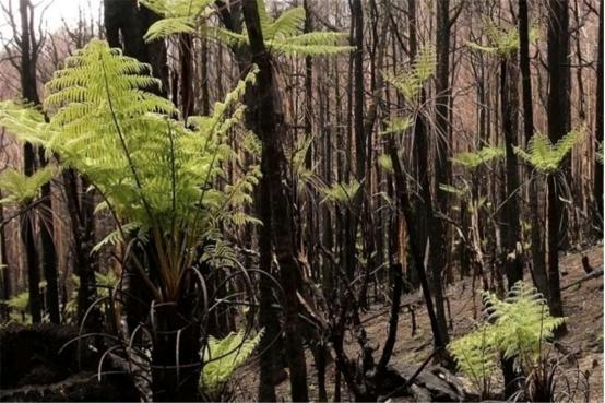 連續燃燒幾個月的澳大利亞,如今怎麼樣瞭?網友:太不可思議瞭-圖3