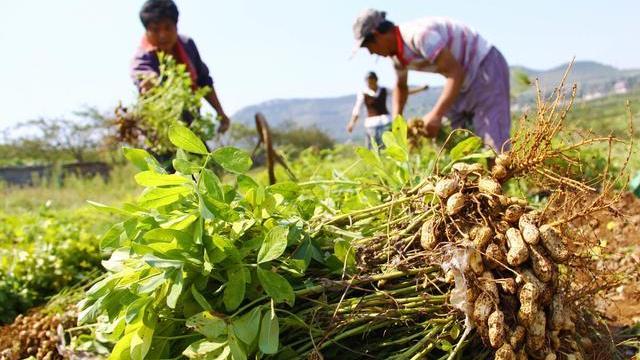 豬價漲完玉米漲,下一步什麼農產品會漲價?土地承包戶大膽預測-圖4