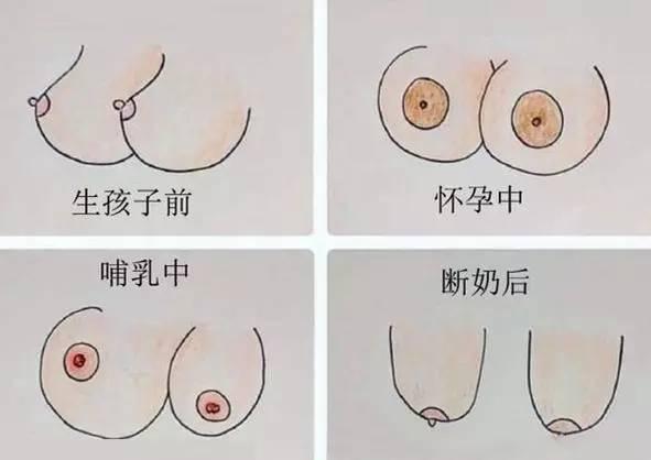 男人們,教你比女人更瞭解自己的胸-圖3