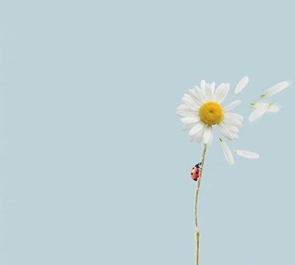 朋友圈網紅心情說說,保持積極樂觀,綻放就在九月-圖2