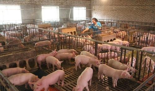 節後各地生豬價格趨於平穩,處於疲軟,逐漸恢復常態化下跌狀態-圖2