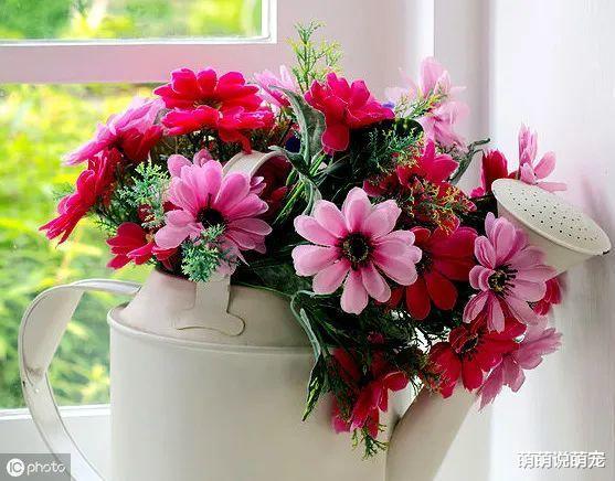 心理學:你第一眼喜歡哪束花,測出你身邊有沒有人正在暗戀你-圖4