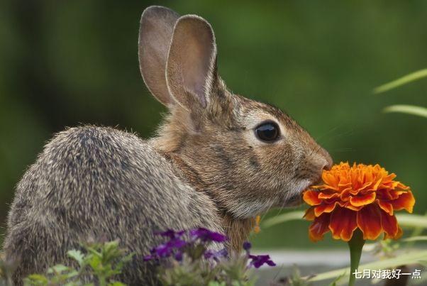 """洛克王国眯眯眼_生肖兔:多长个心眼,11月特别重要,是你人生最大的""""转折点""""-第1张图片-游戏摸鱼怪"""