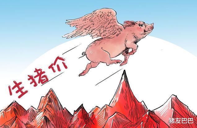 """15漲!豬價再次""""漲紅"""",要""""一飛沖天""""?豬價20元1斤有戲?-圖3"""