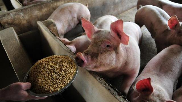 8月31日豬價又是8漲,豬肉回歸15元有多難?答:3個阻力-圖5