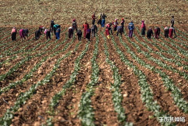 摧毀中東雄獅的戰爭,敘利亞沉重的經濟不堪重負,農牧業瀕臨崩潰-圖9