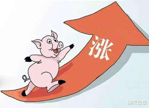 10月6日,豬價大范圍走跌,北方局地反彈,豬價要漲?答案來瞭!-圖4