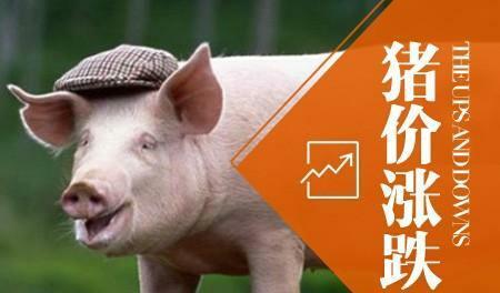 近期豬價繼續下跌,對消費者利好,豬肉價格有望降至20元以內-圖4