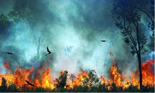 澳大利亞人哭訴:這個毀掉半個澳洲的猛禽,在中國為啥人畜無害?-圖4