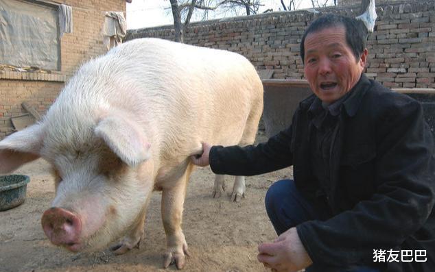 """1漲28跌!豬價遇冷""""跌不止"""",10月豬價要跌破15元一斤?-圖5"""