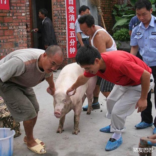 """豬價上漲""""急剎車"""",10月豬價要""""涼涼""""?豬價要跌破15元一斤?-圖6"""