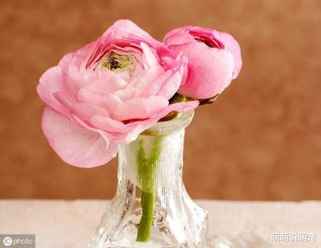 心理學:你第一眼喜歡哪束花,測出你身邊有沒有人正在暗戀你-圖3