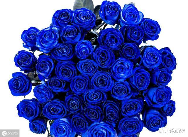 心理學:你最喜歡哪束玫瑰,測出你下半生的婚姻是否依然穩固-圖3