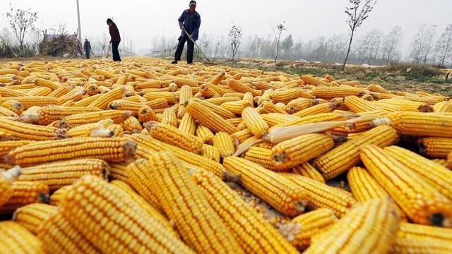 豬價漲完玉米漲,下一步什麼農產品會漲價?土地承包戶大膽預測-圖3