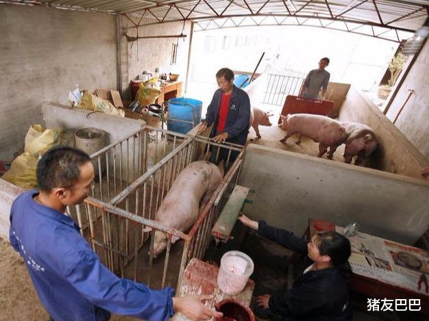 """凍肉來襲屠企壓價,豬價""""上漲生變"""",要跌回15元一斤?答案來瞭-圖4"""