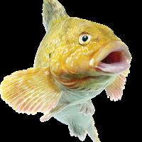 大鱼用户1585811858289376