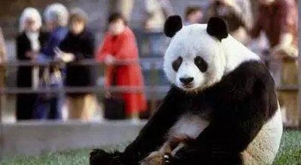 丟人!特朗普對中國熊貓下黑手,遭美國民眾抵制!-圖3