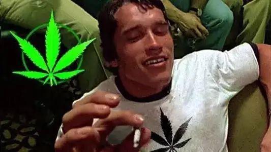 飲品包裝上有印有大麻?網友:活該罰款-圖6