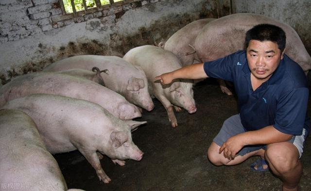 別對豬的價格太高興瞭,下半年養豬戶,仍要面臨兩大難題-圖4