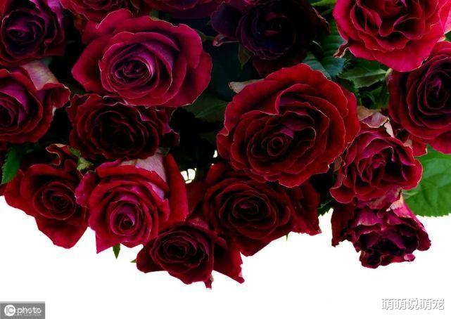 心理學:你最喜歡哪束玫瑰,測出你下半生的婚姻是否依然穩固-圖2