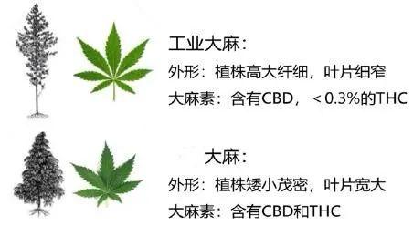 飲品包裝上有印有大麻?網友:活該罰款-圖3