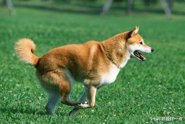 季中邀请赛_生肖狗:你要大喜临头,11月1号躲不过的喜,属狗人看看什么喜?