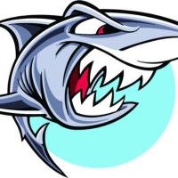 鲨鱼游戏视频