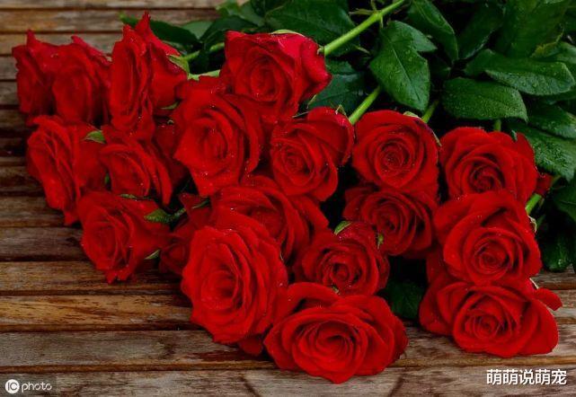 心理學:你最喜歡哪束玫瑰,測出你下半生的婚姻是否依然穩固-圖4