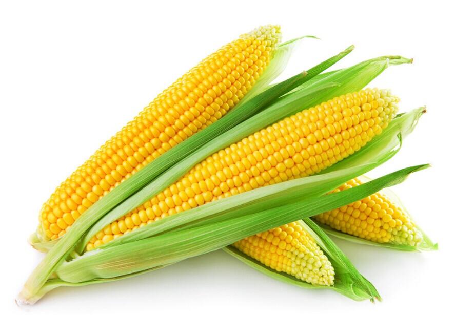 小麥價經歷過陣痛才能有甜頭!價格還會跌麼-圖4