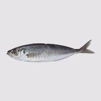 大鱼用户1589710717435292