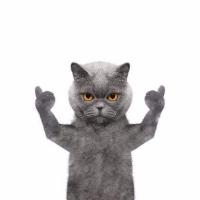猫爷影视盘点