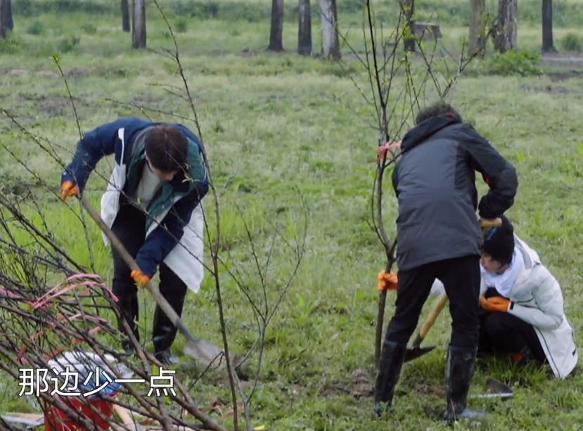張藝興張子楓種樹是在作秀?鏡頭掃到樹坑,網友:能活算我輸-圖4
