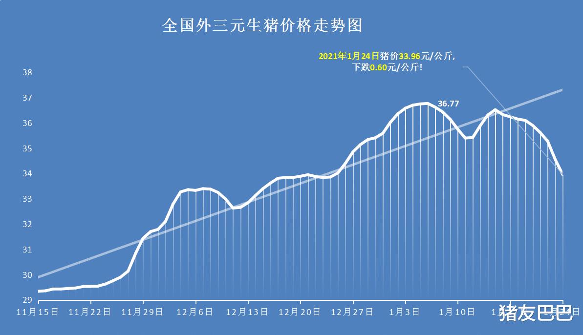 """1月24日豬價:28跌!豬價下跌無休止,春節前要""""跌綠到底""""?-圖2"""