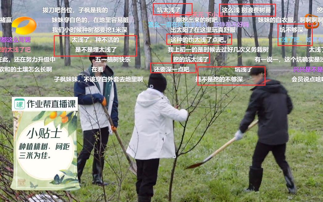 張藝興張子楓種樹是在作秀?鏡頭掃到樹坑,網友:能活算我輸-圖6